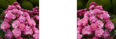 アンジェラ薔薇ミラー法立体画像