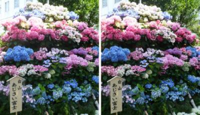 白山神社 白山あじさい富士交差法3D写真